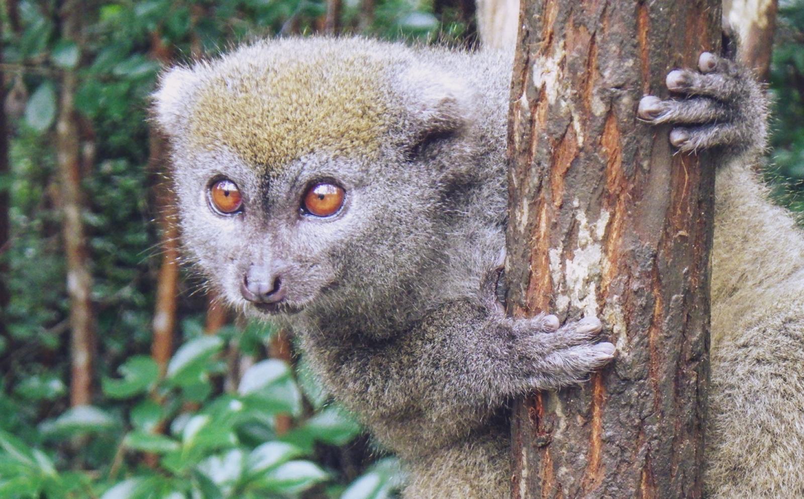 環境保護ボランティアR.H.さんがマダガスカルの熱帯雨林で見かけた野生動物